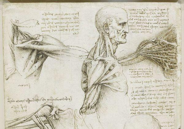 Leonardo Da Vinci, un adelantado en el estudio del cuerpo humano