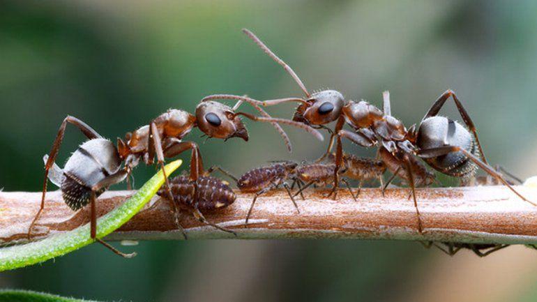 Descubrí por qué hay menos hormigas en San Martín de los Andes