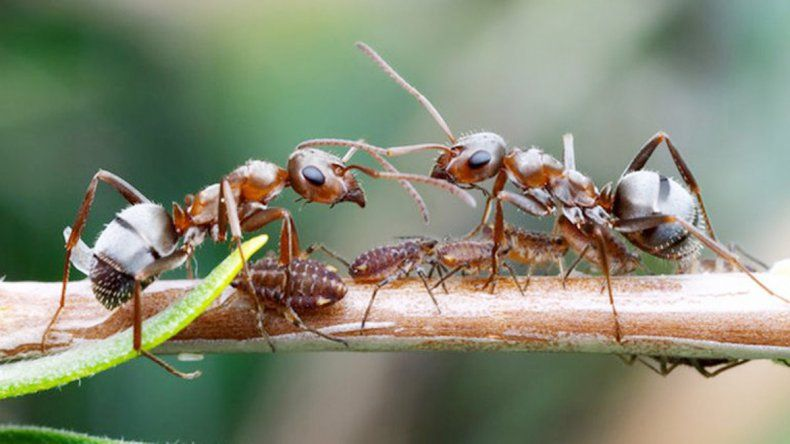 Estos insectos cumplen funciones clave