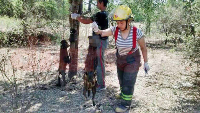 Los bomberos y algunos de los animales colgados