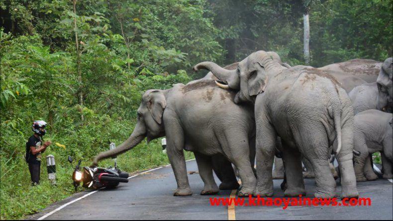 Una manada de elefantes aterrorizó a un motociclista