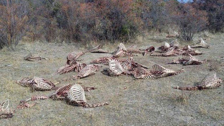 Piden que se investigue una matanza clandestina de ciervos