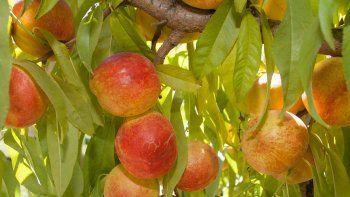neuquen y rio negro presentan propuesta por la fruticultura