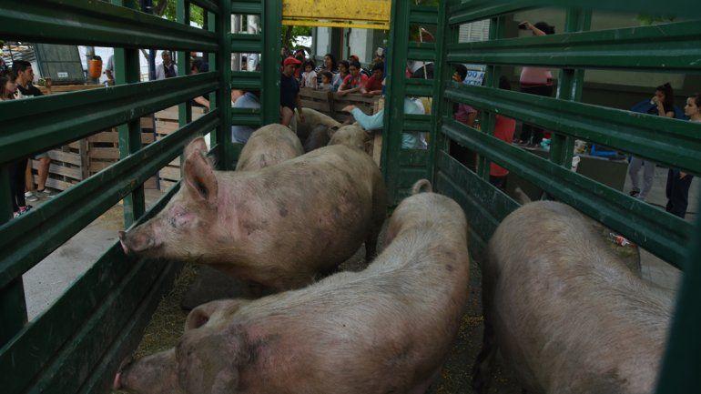 Se llevan los animales pero sigue la protesta en Casa de Gobierno