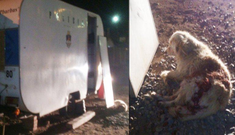 Acribillaron un destacamento policial e hirieron a una perra