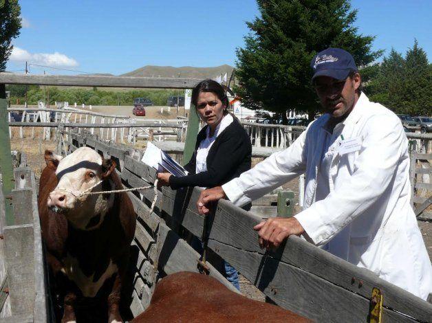 Reviví todo el color de la Exposición de Bovinos de Neuquén en Junín de los Andes