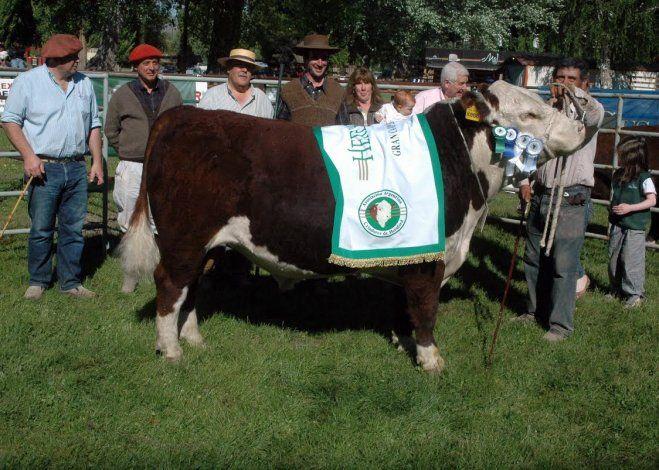 La Expo Rural de Junín de los Andes fue todo un éxito.