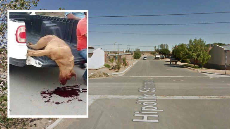 El Dogo de Burdeos que mató el vecino.