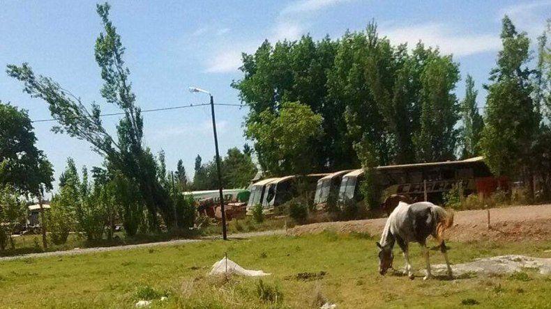 Denuncian que los caballos están todo el día atados al rayo del sol.