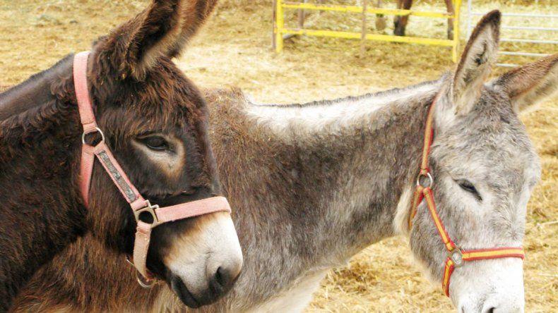 China necesita importar un millón de burros al año.