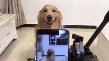 El perro que sonríe a la cámara es furor en la web