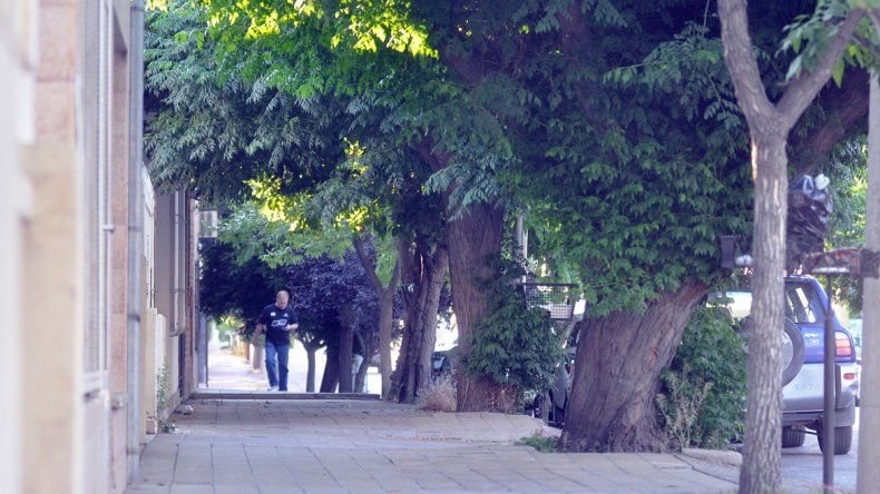 Los concejales neuquinos quieren ver árboles por toda la ciudad.