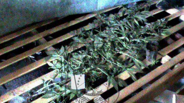 Iban a clausurar un lugar porque vendían alcohol y encontraron marihuana