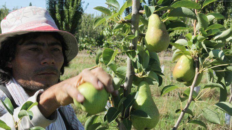 La pera registra la mayor diferencia entre lo que recibe el productory lo que paga el consumidor en el supermercado.