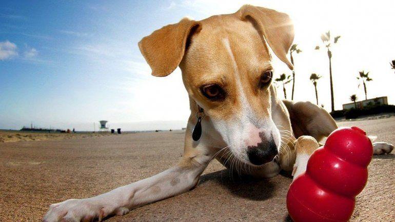 Los juguetes siempre son una buena opción para mantener estimulado a tu perro o gato.