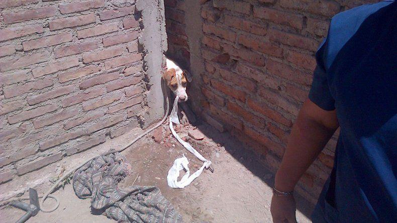 Rescatan a un perro que escapó asustado por la pirotecnia y quedó atrapado en un paredón