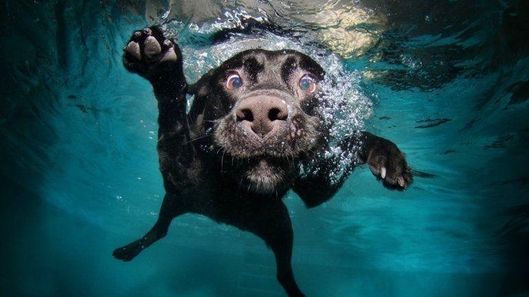 No todas las razas se adaptan al agua.