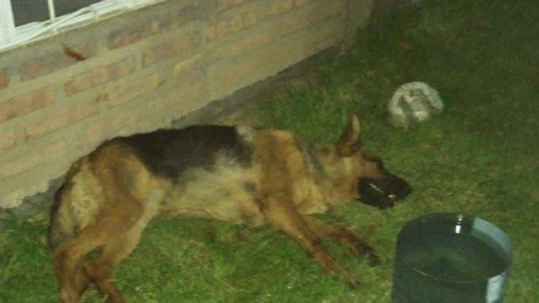 Una perra murió de un infarto por los fuegos artificiales en la comarca petrolera.