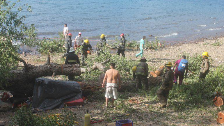 La Justicia busca elementos que permitan determinar si el árbol que cayó sobre los chicos debía haber sido talado.