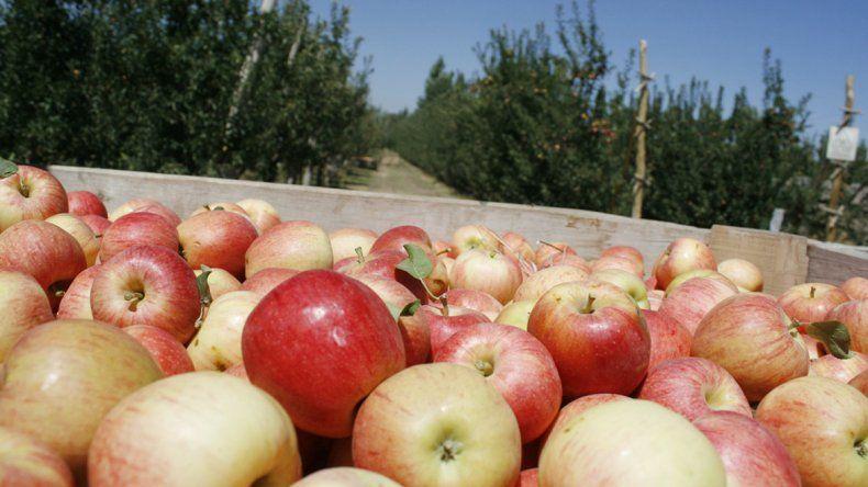 Se estima que en 2015 la caída de las exportaciones frutícolas fue del 25%.