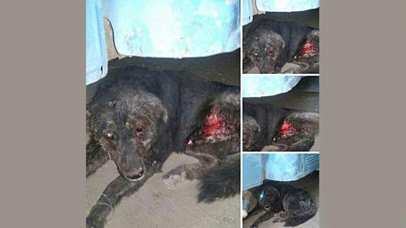 Zapala: bronca y repudio por brutal golpiza a un perro