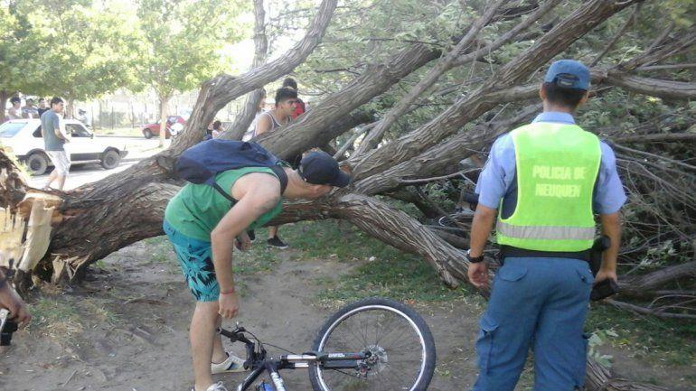 Temporal en Neuquén: el viento tiró árboles que aplastaron varias motos cerca del Limay