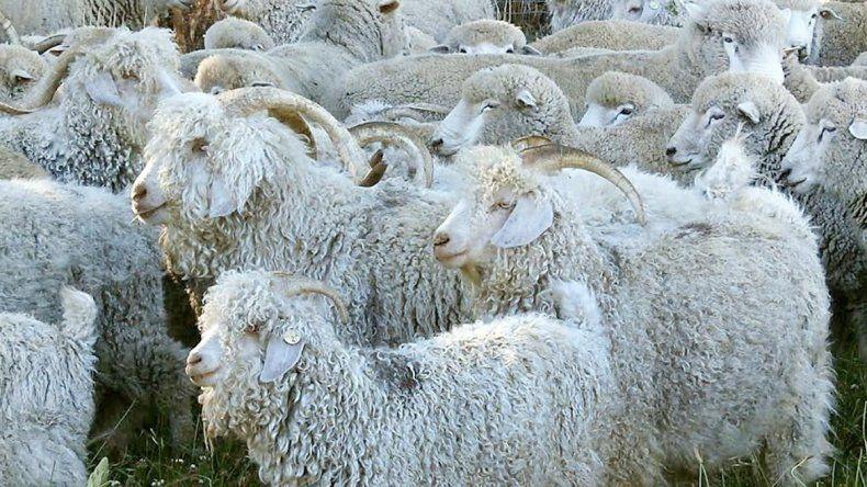 La ganadería fue uno de los rubros más beneficiados por la provincia.