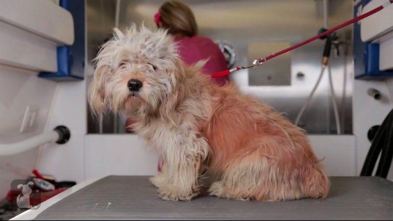 Charlie, un perrito que tuvo una segunda oportunidad