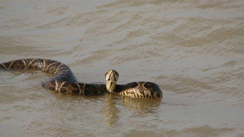 Aparecieron serpientes en Quilmes y cerraron la costa
