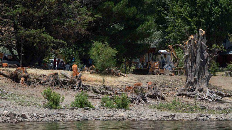 Se desplomó un árbol cerca de un balneario en el lago Correntoso
