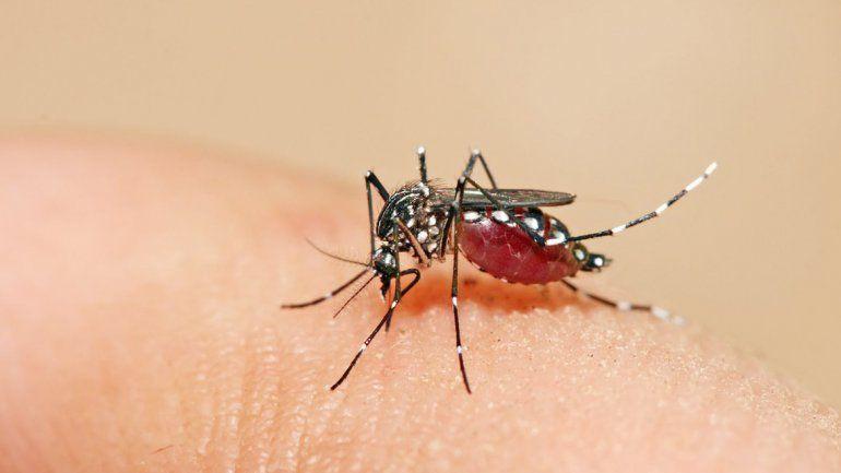 El mosquito Aedes aegypti es el responsable de transmitir el virus.