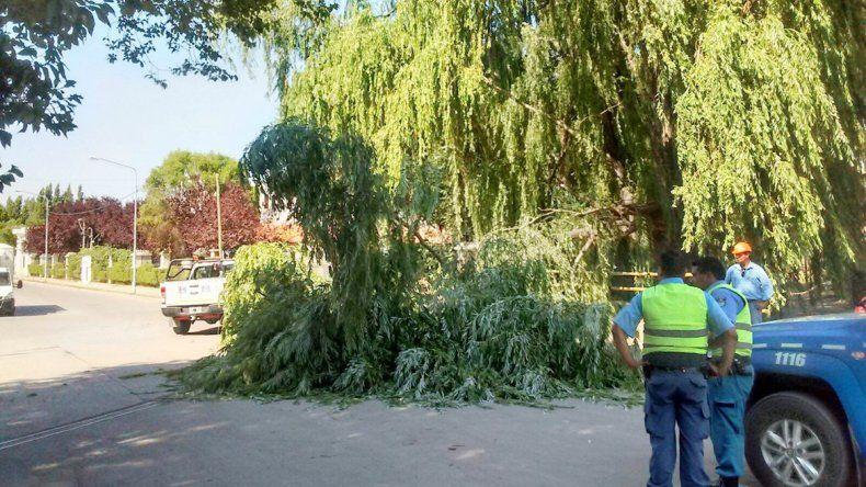 La caída de algunas ramas