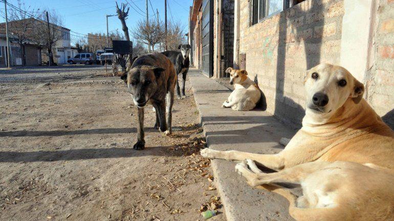 En muchos barrios se observan perros sueltos sin un dueño a toda hora y en todo lugar. La situación se replica en pleno centro de la ciudad.