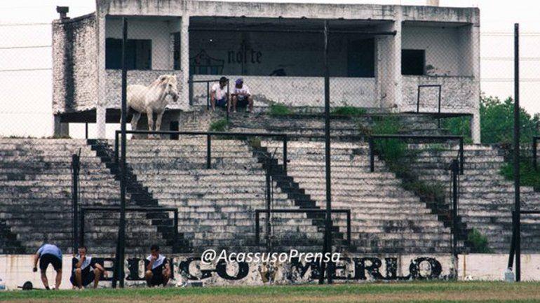 Increíble, pero real: un caballo blanco miró desde la tribuna un amistoso del ascenso