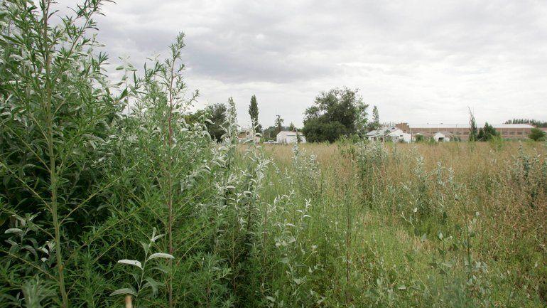 Algunos terrenos parecenselvas en medio de la ciudad.
