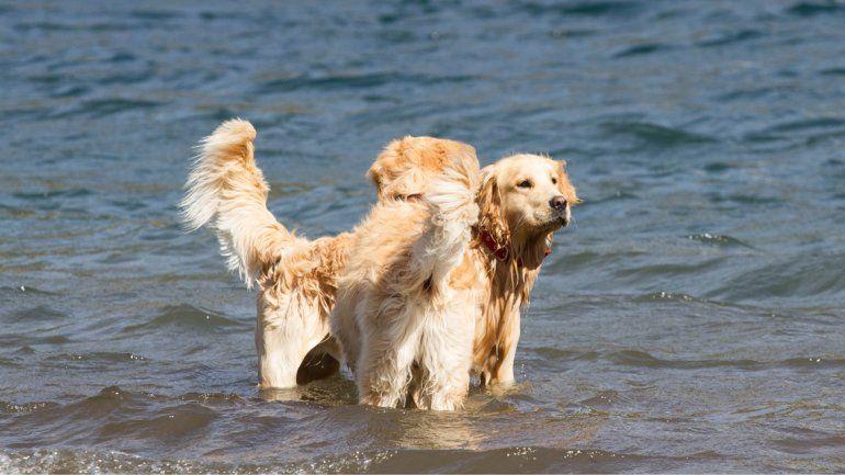 Hasta los perros se divierten en el lago Lácar.