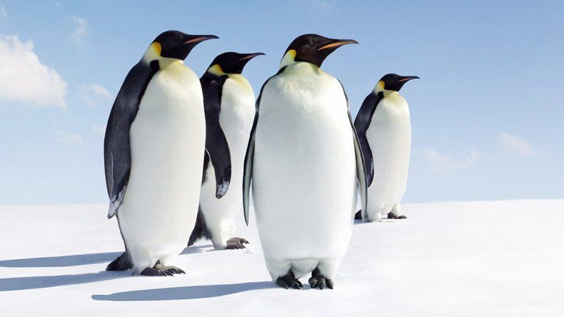 Las especies antárticas corren riesgo por el aumento de la temperatura.