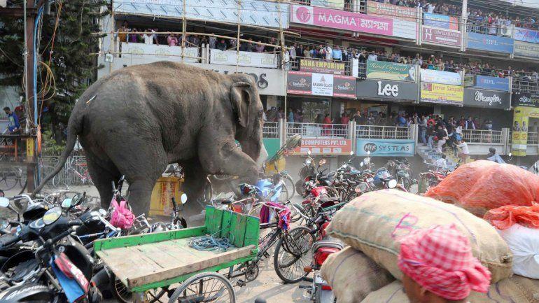 El elefante salvaje