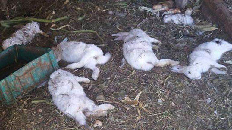 Al menos diez conejos del Refugio Luan murieron en manos de los perros.