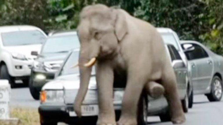Imagen de la TV que muestra al elefante causando los destrozos.