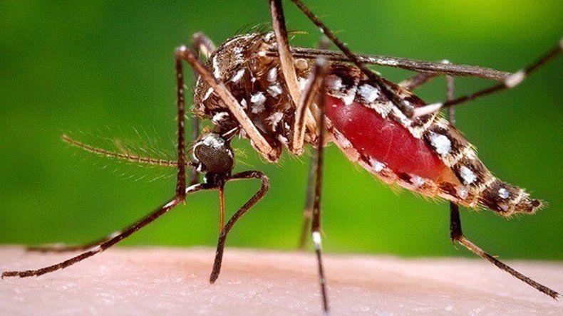 Zona de dengue