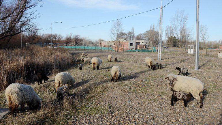 La zona rural de Valentina va desapareciendo de a poco.