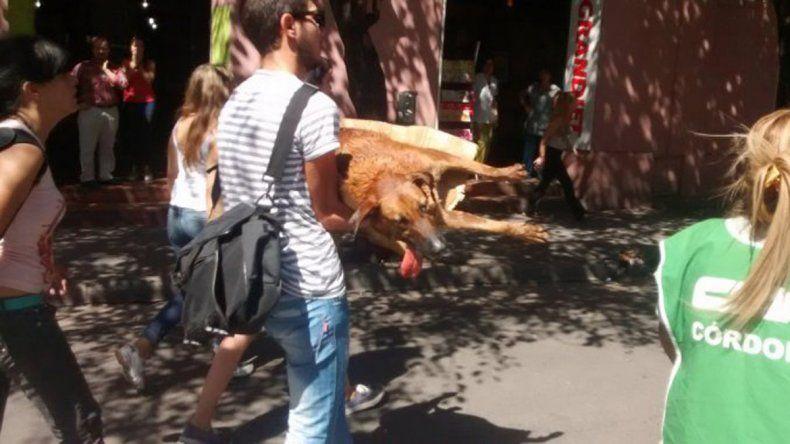 Una perra callejera fue hrida con una bomba de estruendo durante la marcha de los estatales en Córdoba.