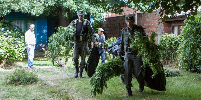 Gendarmería secuestró las plantas y detuvo al dueño de casa.