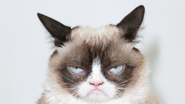 Grumpy Cat es la soberana del reinado gatuno en las redes.