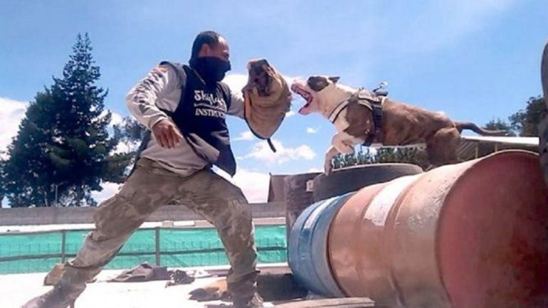 Los narcos de la provincia de San Juan se protegen de la Policía con el accionar de los perros
