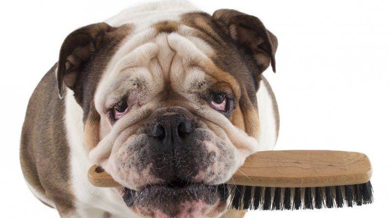 En esta época del año empieza la clásica muda del pelaje. ¡Mejor no te estreses!
