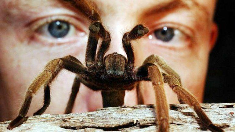 Un 32% de las mujeres y un 18% de los hombres tienen fobia irracional por las arañas.