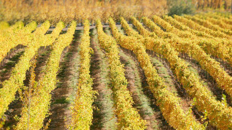 Las IG protegen del abuso comercial a aquellos vinos cuya característica pueda ser atribuida a su origen.