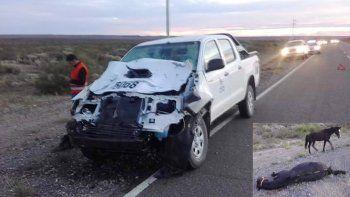 Otra vez los animales sueltos: chocó contra un caballo en la Ruta 17 y se salvó de milagro